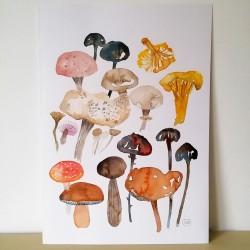 Wild Mushrooms I : Original...