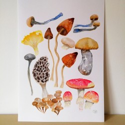 SOLD OUT : Wild Mushrooms...